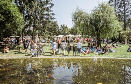 Der Teich im Stadtpark mit Fischen darin