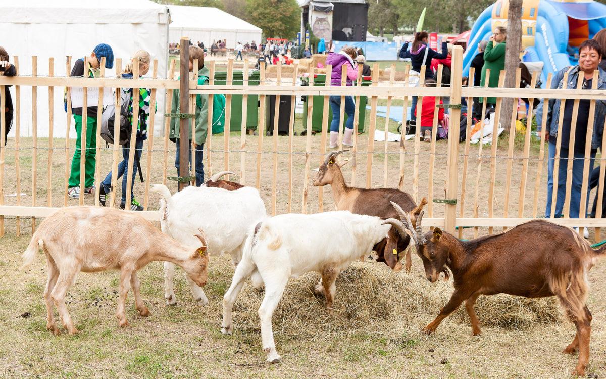 Das Festival der Tiere