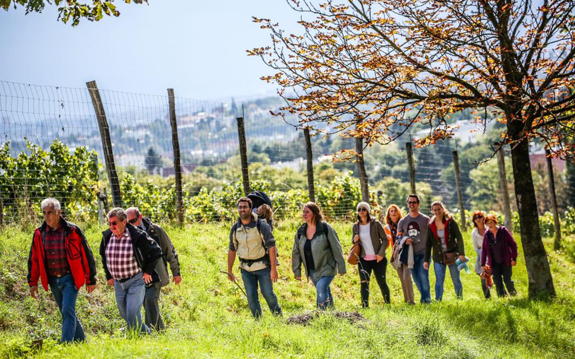 Menschen beim Wandern vor Weinstöcken
