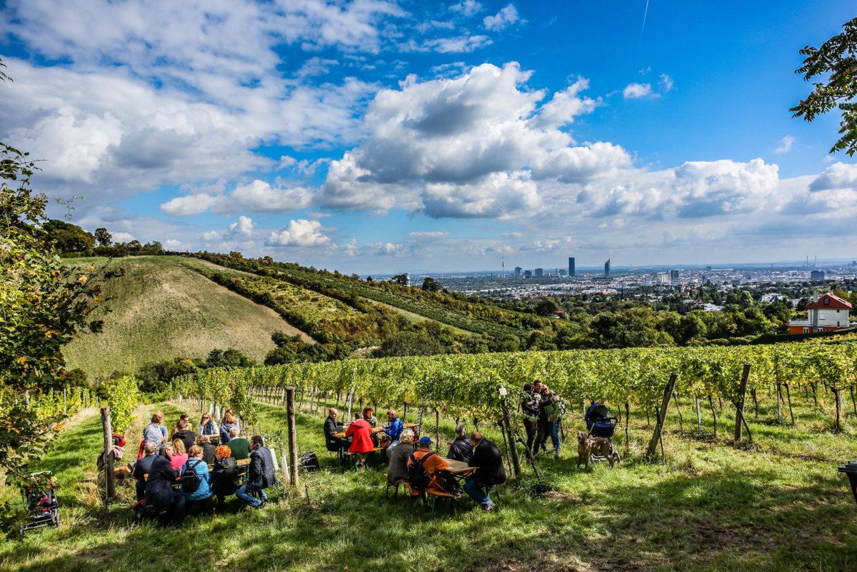 Blick über Wien mit Weinstöcken im Vordergrund