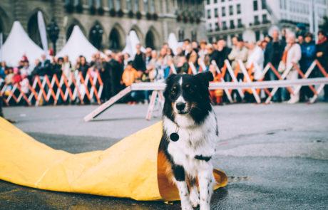 Ein Rettungshund auf dem Sicherheitsfest